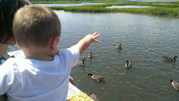 Feeding the ducks.